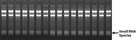 Total RNA Purification 96-Well Kit Figure 1