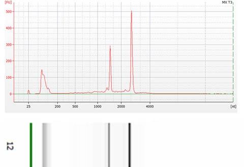 Total RNA Purification Maxi Kit Figure 1