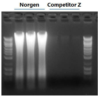 Figure 1.  Higher Yields of DNA than Competitor Z