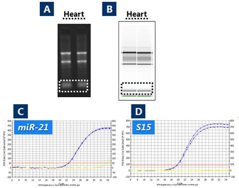 RNA/DNA Purification Kit Figure 1