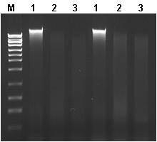 Genomic DNA Isolation Kit Figure 2