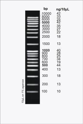 HighRanger Plus 100 bp DNA Ladder Figure 1