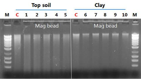 Figure 1. DNA isolated from high humic acid (top soil) and regular soil (clay)